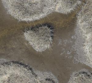High Resolution Image of Marsh Habitat to Support Species Identification